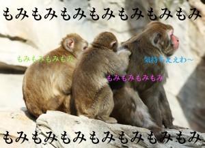 yun_6564